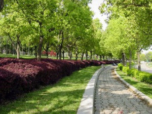 The green city is beautiful during summer and spring.